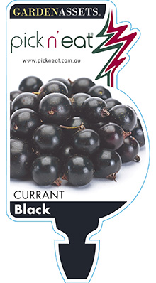PICK-N-EAT-BLACK-CURRANT