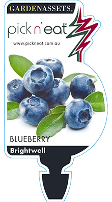 PICK-N-EAT-BLUEBERRY-BRIGHTWELL