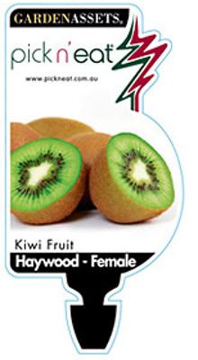 Kiwi-Female