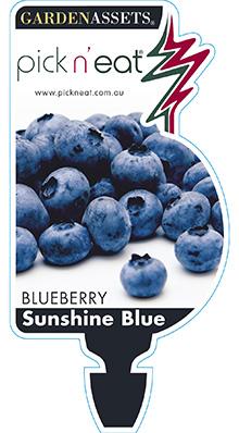 PICK-N-EAT-BLUEBERRY-SUNSHINE-BLUE