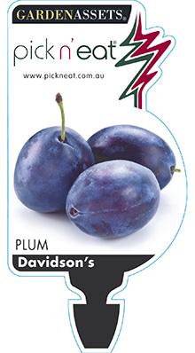 PICK-N-EAT-DAVIDSONS-PLUM