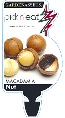 PICK-N-EAT-MACADAMIA