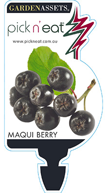 PICK-N-EAT-MAQUIBERRY