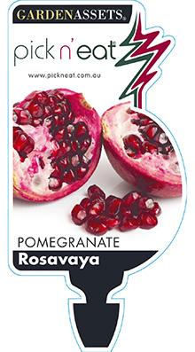 PICK-N-EAT-POMEGRANTATE-ROSAVAYA