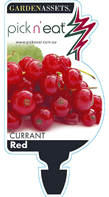 PICK-N-EAT-RED-CURRANT