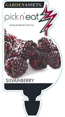 PICK-N-EAT-SILVANBERRY
