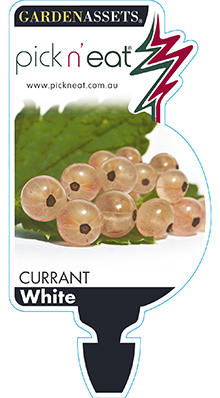 PICK-N-EAT-WHITE-CURRANT