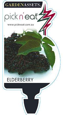 PICK-N-EAT-ELDERBERRY