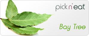pick-n-eat-baytree