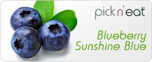 pick-n-eat-blueberry-sunshineblue
