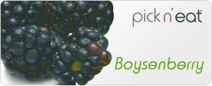 pick-n-eat-boysenberry