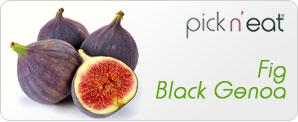 pick-n-eat-fig-blackgenoa