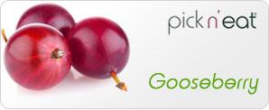 pick-n-eat-gooseberry