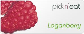 pick-n-eat-loganberry