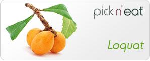 pick-n-eat-loquat