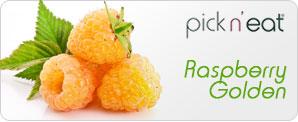 pick-n-eat-raspberry-golden