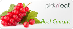 pick-n-eat-redcurrant