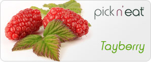 pick-n-eat-tayberry