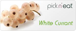 pick-n-eat-whitecurrant