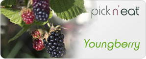 pick-n-eat-youngberry